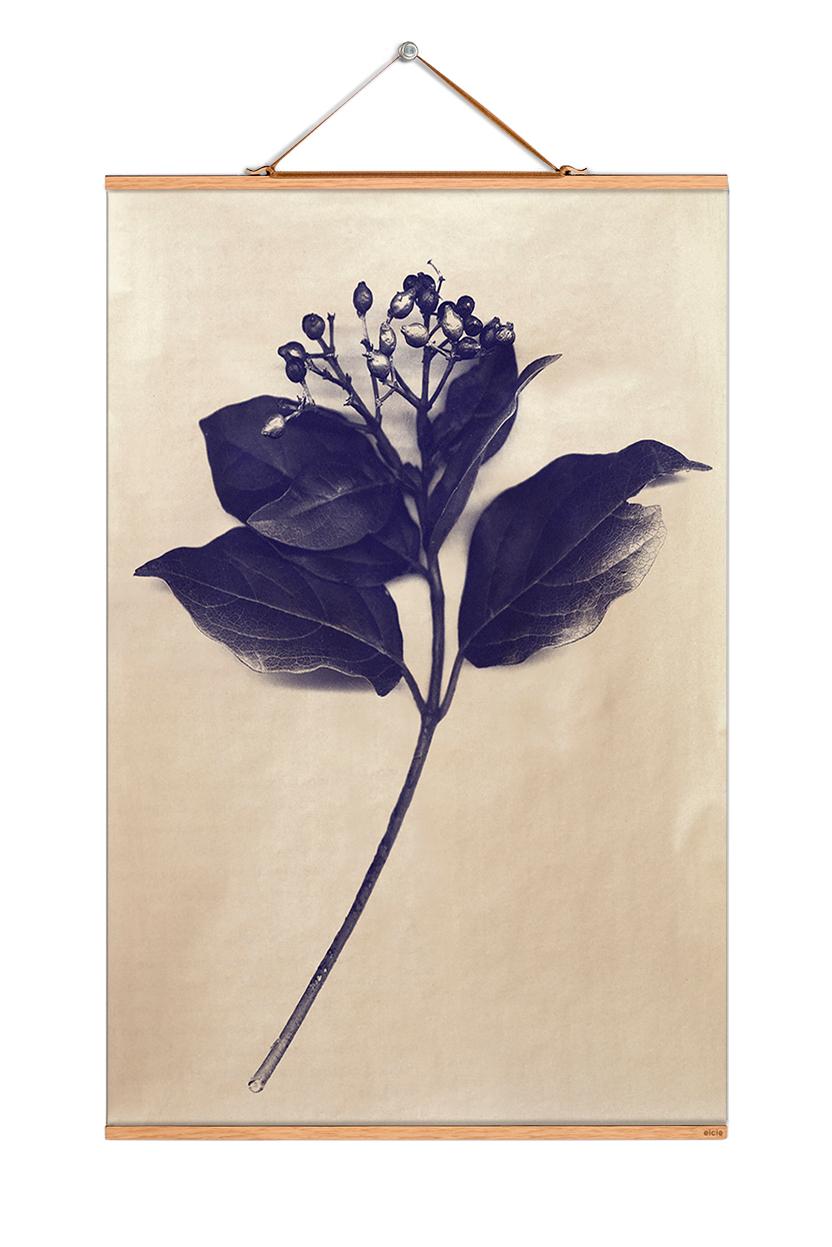 Plants Blueprint Poster No 82 eicie