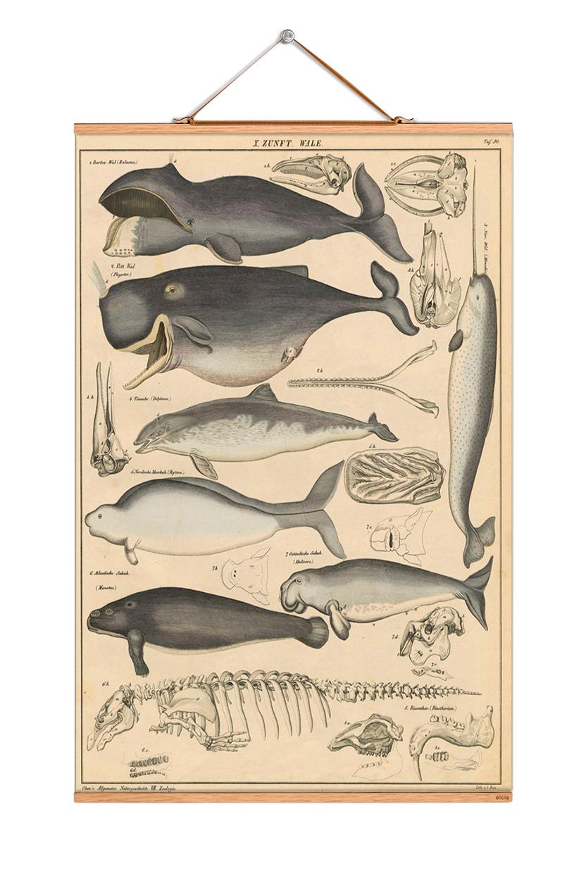 Animals Poster No 16 eicie