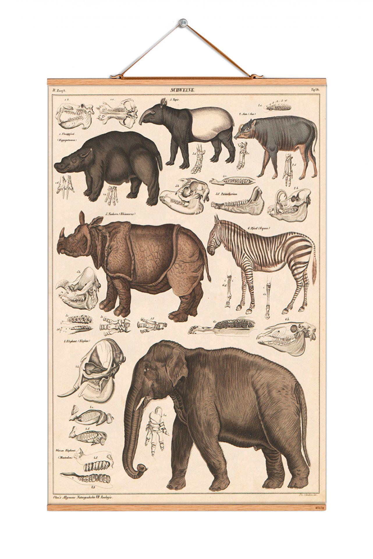 Animals Poster No 13 eicie