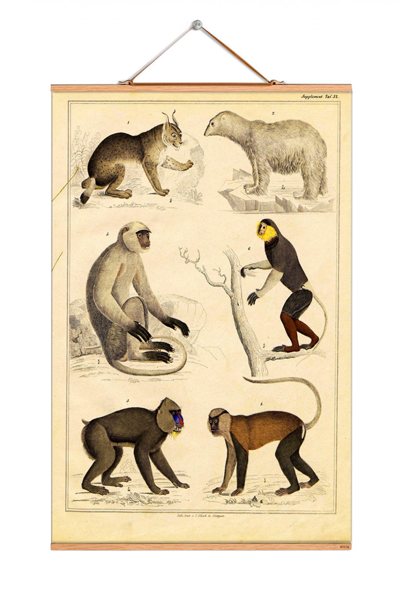 Animals Poster No 04 eicie